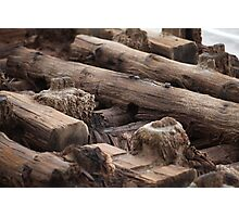 wooden foundation piles Photographic Print