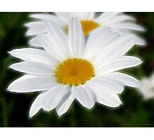 White Daisy Photographic Print