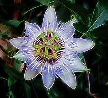 Purple Passion Flower by Kathie McCurdy