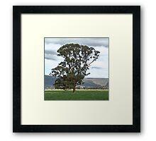 Plains Tree Framed Print