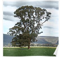 Plains Tree Poster