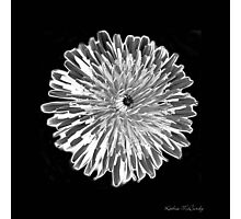 Black & White Dandelion Photographic Print