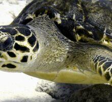 Caribbean Sea Turtle Sticker