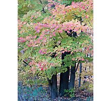 Pink Leaves Photographic Print