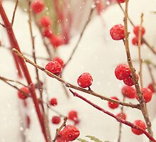 Red Winter Berries II by afeimages