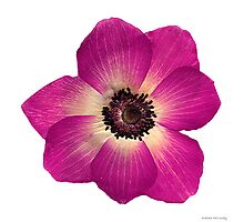 Perfect Flower Photographic Print