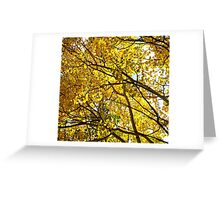 Colorado Aspen Trees in Fall Greeting Card