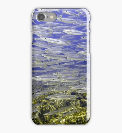 Silver Fish Wall  iPhone Case/Skin