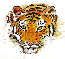 Eye Of The Tiger by Lisa Pike