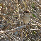 A Bird in the Reeds by kibishipaul