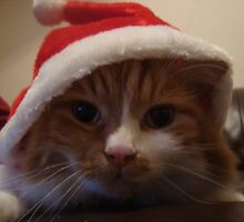 Merry Christmas from Ginger George by imoulton
