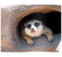 Meerkat posing from a Tree Stump  Poster