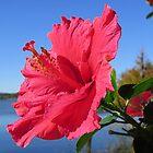 Bloomin' Beautiful in Florida by Ronee van Deemter