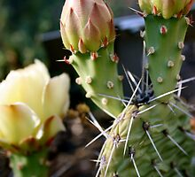 Prickly Pear Rose by RoamngNaturalst