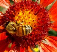 Orange and Red Gaillardia Prairie Flower with Bee Macro Sticker