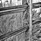 Rustic Fence by homendn
