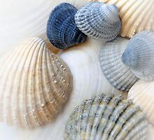 Just Sea Shells by designed2dazzle
