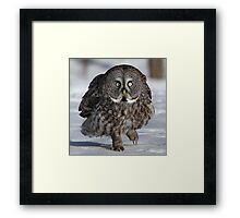 Maybe if I'm real quiet..... Framed Print
