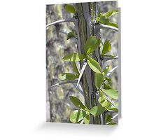Thorns on a Octillo Greeting Card