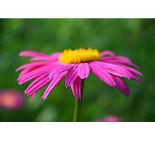 Pretty little flower Photographic Print