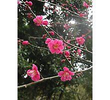 Cherry Up Photographic Print