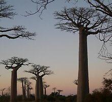 Baobab  by verypunny