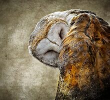 Barn Owl by CelticOrigins