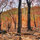 Bushfire Abstract - Mount Wilson and Mount Irvine NSW Australia - The HDR Experience by Philip Johnson