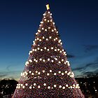 National Christmas Tree, Washington DC by Kelly Morris