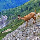 On The Edge by JamesA1