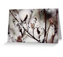 wintry solstice~ Greeting Card