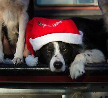 HO HO HO  by Texas Sheepdogs