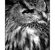 Owl (Black & White Version) by MoGeoPhoto