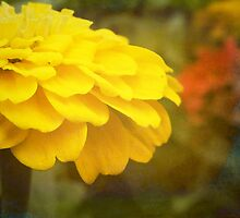 Warm Yellow Zinnia by Linda  Makiej