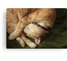 Curled Up Gumbo Canvas Print