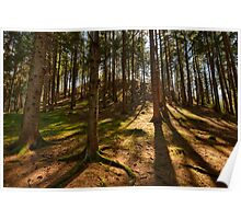 Conifer forest lit by the sun naturalistic landscape color fine art - Il bosco d'Estate Poster