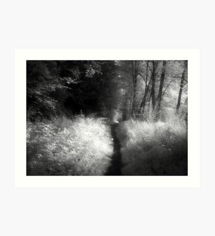 Path in the forest black and white infrared film photography - Il sentiero delle Fate Art Print