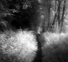 Path in the forest black and white infrared film photography - Il sentiero delle Fate by visionitaliane