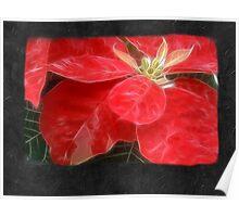 Mottled Red Poinsettia 1 Ephemeral Blank P4F0 Poster