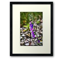 Butterfly on pink flowers close up macro nature color photo - Farfallone Framed Print