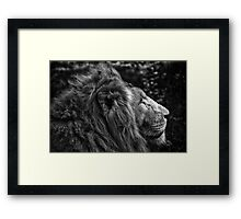 Fine art black and white naturalistic animal wall art - lion close up - Il Re Framed Print