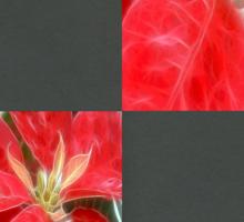 Mottled Red Poinsettia 1 Ephemeral Blank Q6F0 Sticker