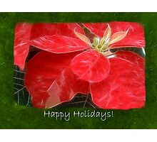 Mottled Red Poinsettia 1 Ephemeral Happy Holidays P1F5 Photographic Print