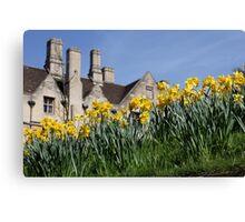 Cambridge Daffodils Canvas Print