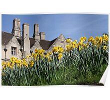 Cambridge Daffodils Poster