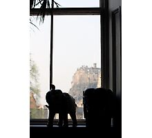 The Elephant House, Edinburgh Photographic Print