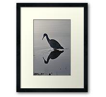 White Faced Heron Self Reflection Framed Print