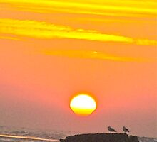 Gulls at Sunrise 1 by elainedesterre