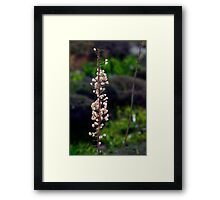 Wild Flower Malta -- Location Red Tower Mellieha Framed Print