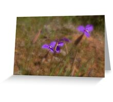 Silky Purple Flags (Patersonia sericea) Greeting Card